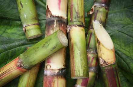 Sliced sugarcane